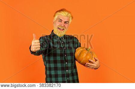 Farmer Carry Big Pumpkin. Cooking Recipe. Harvest In Garden. Homegrown Pumpkin. Eat Healthy. Organic