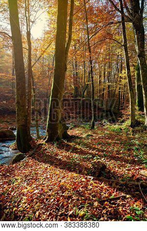 Trees On The Bank On The Mountain River. Forest Stream Among The Forest In Colorful Foliage. Sunny A