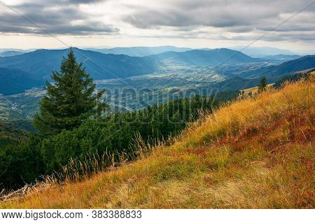 Spruce Forest On The Hillside Meadow. Beautiful Mountain Landscape In Autumn Season. High Ridge In T
