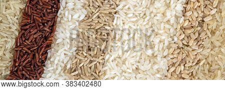 Panoramic Banner With Eight Different Varieties Of Rice. The Texture Of Grains Of Rice Of Different