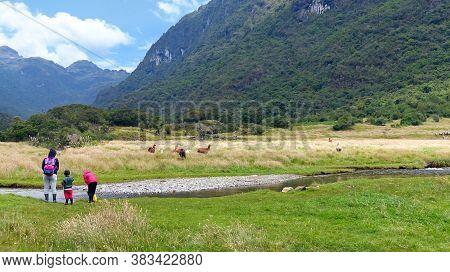 Azuay Province, Ecuador - March 16, 2020: Mountain View At Cajas National Park, Llaviuco Lake Recrea