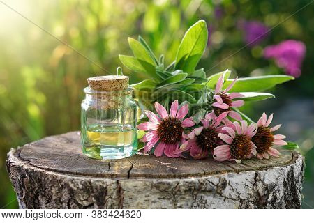 Bottle Of Essential Oil Or Infusion, Coneflowers And Sage Plants On Stump Outdoors. Alternative Medi