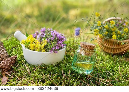 Bottle Of Essential Oil Or Infusion, Mortar Of Thyme And Sedum Flowers, Basket Of Medicinal Herbs On