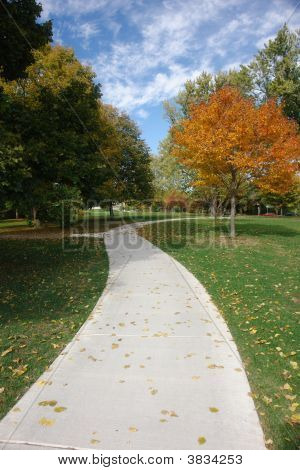 Sidewalk Through October Forest