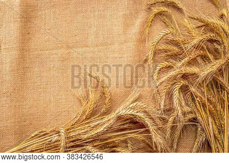 Spike View. Whole, Barley, Harvest Wheat Sprouts. Wheat Grain Ear Or Rye Spike Plant On Linen Textur