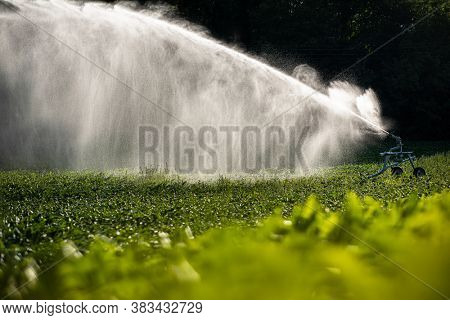 Intense agriculture corn fiekd being irrigatedwith huge amounts of water on a hot summer day