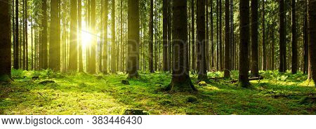 Misty Foggy Nature Background. Forest Sunrise And Rain Forest River, Green Forest Stream. Natural En