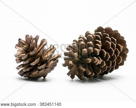 Pine Cone Isolated On White Background. Pine Cone Isolated On White Background.