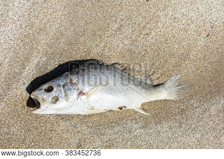 Dead Fish At Sandy Beaches From Damaged Ecosystems