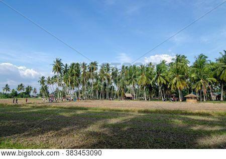 Penaga, Penang/malaysia - Mar 15 2020: Coconut Plantation Under Blue Hot Sunny Day.