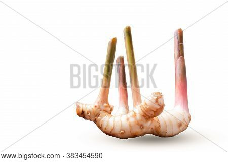 Fresh Slices Galangal Rhizomes Isolated On White Background Is A Herb And Raw Material In Cooking
