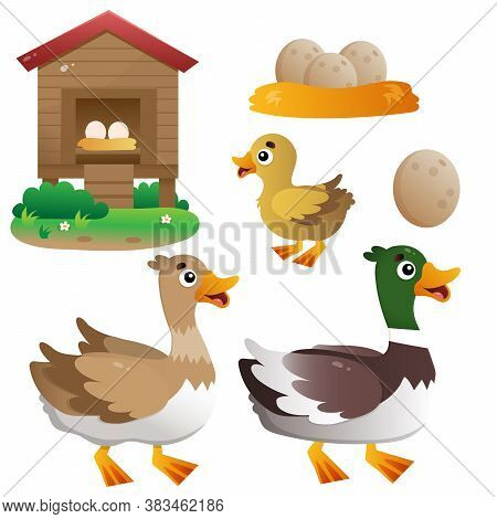 Color Image Of Cartoon Duck With Drake And Duckling On White Background. Farm Animals. Vector Set Fo