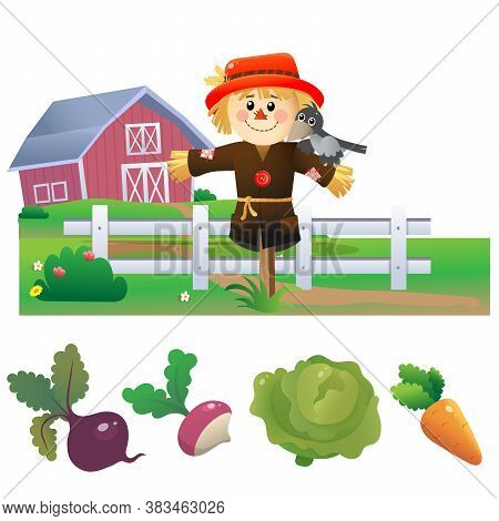 Color Images Of Cartoon Stuffed Or Scarecrow With Harvest On White Background. Vegetable Garden.
