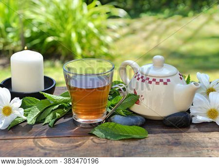 Cup Of Mint Tea And Teapot On A Wooden Table In Garden Among Fresh  Leaf And White Flowers
