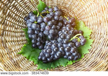 Bunches Of Fresh Deep Black Ripe Grape Fruits With Green Leaves In A Brown Rattan Basket, Top View P