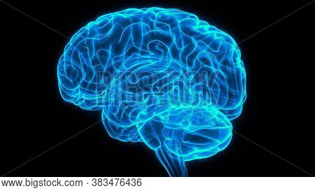 3d Illustration Concept Of Central Organ Of Human Nervous System Brain Anatomy