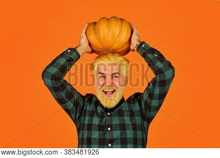 Farming And Agriculture. Farmer Carry Big Pumpkin. Cooking Recipe. Harvest In Garden. Homegrown Pump