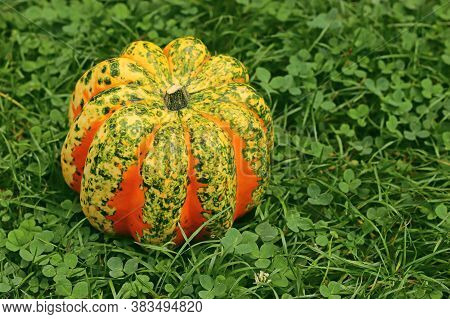 Close-up Of A Multi Colored Chameleon Pumpkin On Grass
