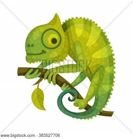 Chameleon Green Lizard As African Animal Vector Illustration