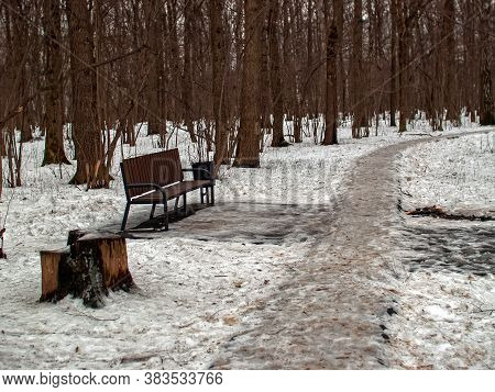 Paved Path In The Forest Under The Snow, Moscow