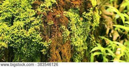 Green Moss On A Tree. This Is A Close-up/macro Photo Of Moss, Showing Its Fascinating Details. Photo