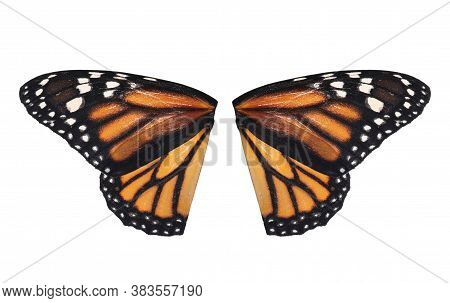 Beautiful Monarch Butterfly Wings On White Background