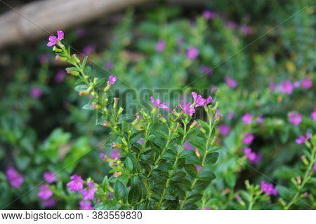 Small Tree And  Purplel Flowers Beautyfull Backround