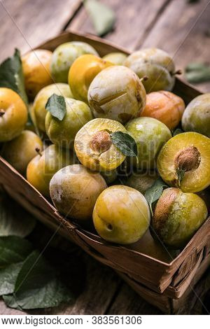 Ripe  Yellow  Plum Fruits Harvested In A Basket. Plum Textured. Plum Background. Fresh And Sweet Plu