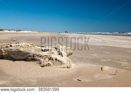 Blown Sand Makes A Design On Driftwood At The Gulf Of Mexico Beach On North Padre Island, Texas On A