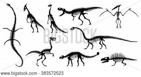 Collection Silhouettes Of Dinosaurs Skeletons. Vector Hand Drawn Dino Skeletons. Dinosaurs Bones, Ex