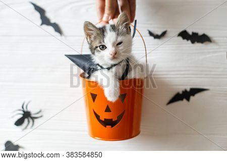 Happy Halloween. Evil Kitten Sitting In Halloween Trick Or Treat Bucket On White Background With Bla