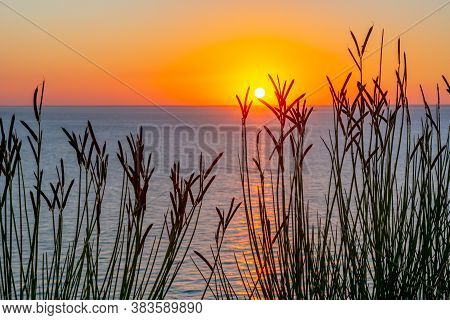 Plant Silhouettes With Scenic Sunset At Sea