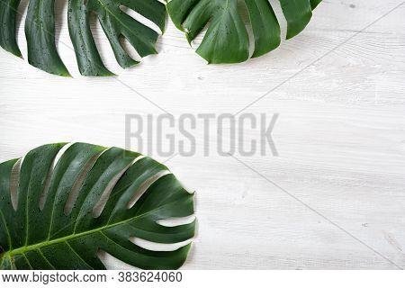Trendy Summer Tropical Leaves, Tropical Leaves On White Background, Summer Tropical Backgrounds, Min