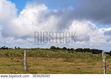 Weeds Blowing In The Breeze Behind A Barbed Wire Fence Under A Cloudy Sky