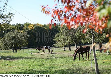 Horses On Pasturages