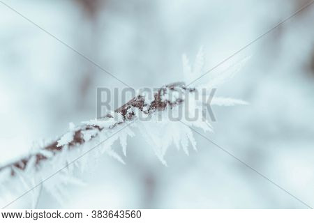 Christmas Frosty Winter Background. Snow And Frost Crystals On The Branch. Copy Space.