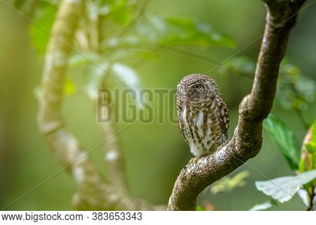 A Great Horned Owl On A Branch, Portrait Of An American Eagle Owl, Owls On The Branch