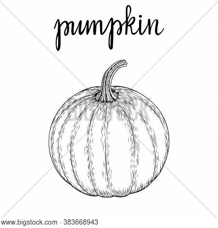 Vector Image Of A Hand-drawn Pumpkin Black White, Coloring. Ink Or Pen Sketch. Eps 10.