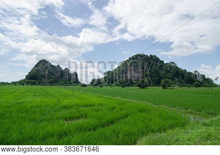 Paddy Field At Kodiang During Blue Sky Morning.