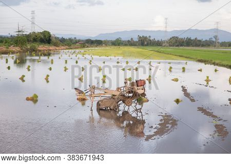 Paddy Harvester In The Water.rice Field In Malaysia.