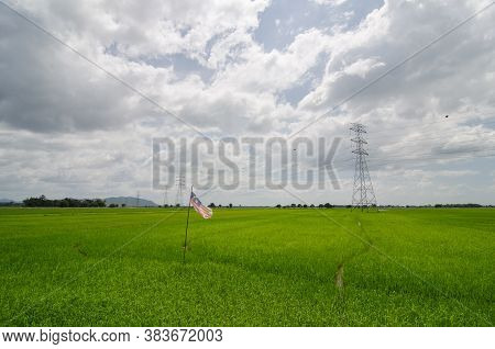 Malaysia Flag At Paddy Field In The Afternoon.