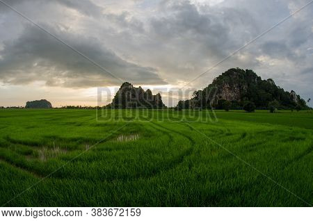 Paddy Field At Kodiang Kedah During Sunset. Background Is Limestone Hill.