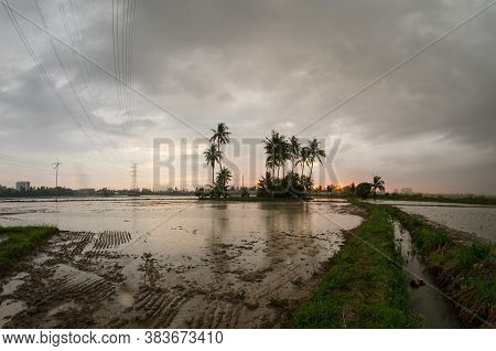 Leading Path Towards Coconut Tree In Paddy Field During Flooded Season.