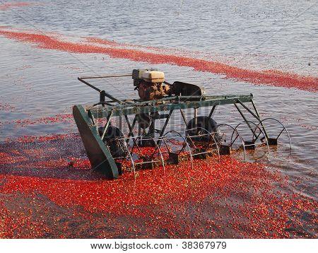 Water Reel Harvester
