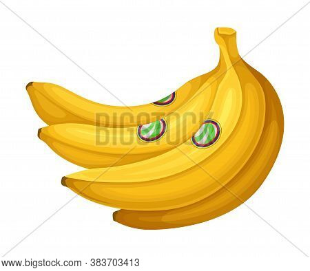 Bunch Of Ripe Bananas As Ecuador Attribute Vector Illustration