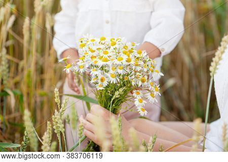 Pretty Woman Holding Camomiles Flowers In Hands. Close Up Photo.