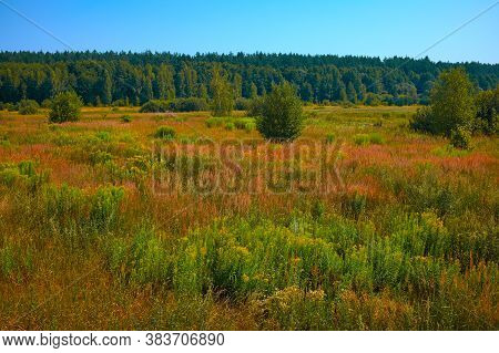Summer Landscape With Green And Brawn Grass.