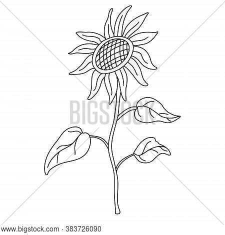 Sunflower On A Long Stem With Leaves In Doodle Style. Isolated Outline. Hand Drawn Vector Illustrati