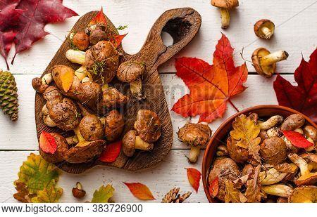 Autumn Mushroom Harvest. Edible Oily Mushrooms And Colorful Fallen Leaves On Wooden Board On White B