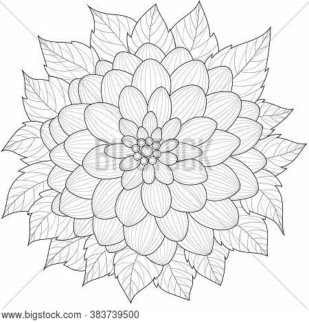 Dahlia Flower.coloring Book Antistress For Children And Adults. Illustration Isolated On White Backg